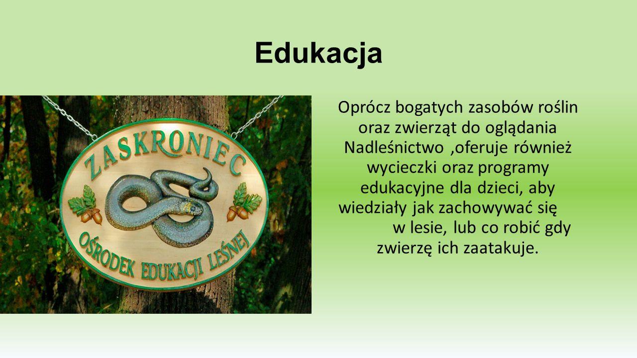 DREWNO A ŁOWIECTWO - REKORDY SPRZEDAŻ DREWNA Jak większość Nadleśnictw w Nadleśnictwie w Włoszakowicach sprzedawane jest drewno.