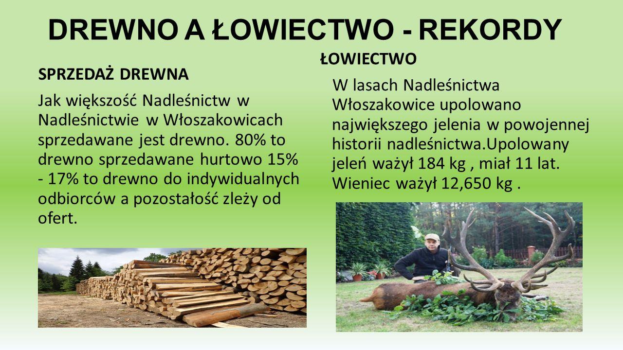 DREWNO A ŁOWIECTWO - REKORDY SPRZEDAŻ DREWNA Jak większość Nadleśnictw w Nadleśnictwie w Włoszakowicach sprzedawane jest drewno. 80% to drewno sprzeda