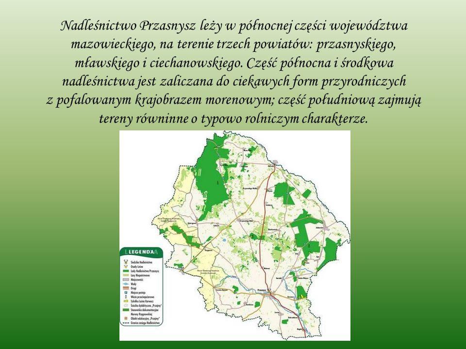 Nadleśnictwo Przasnysz leży w północnej części województwa mazowieckiego, na terenie trzech powiatów: przasnyskiego, mławskiego i ciechanowskiego.