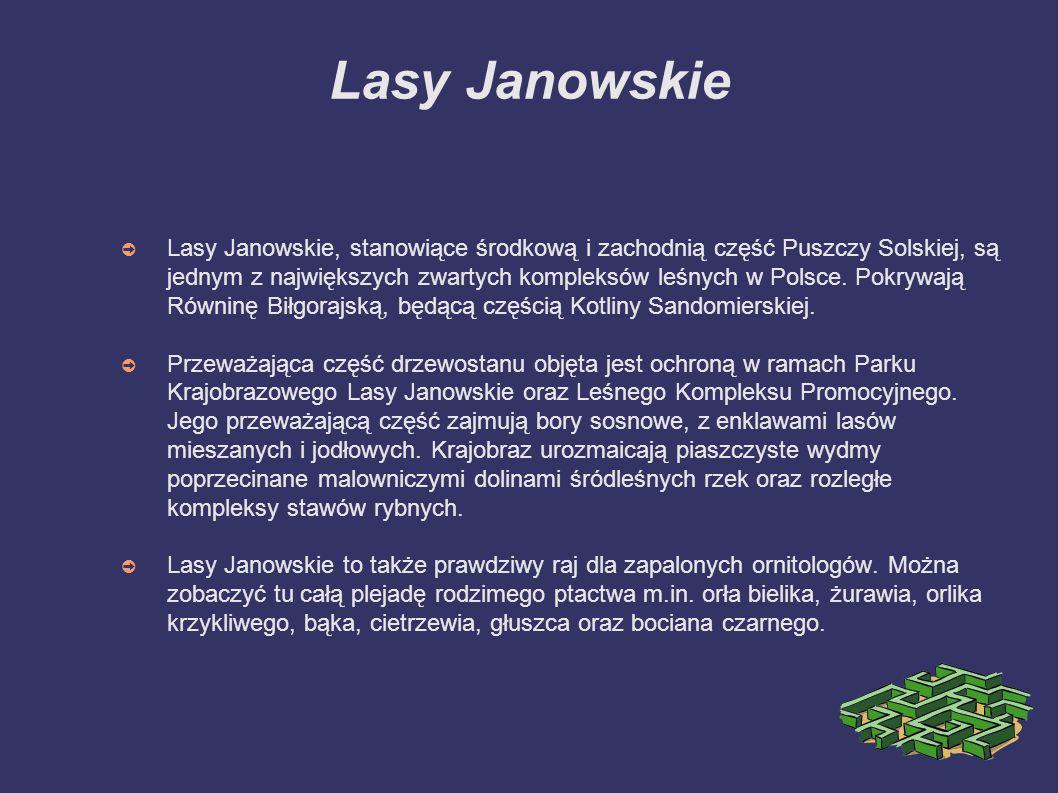 Lasy Janowskie ➲ Lasy Janowskie, stanowiące środkową i zachodnią część Puszczy Solskiej, są jednym z największych zwartych kompleksów leśnych w Polsce.