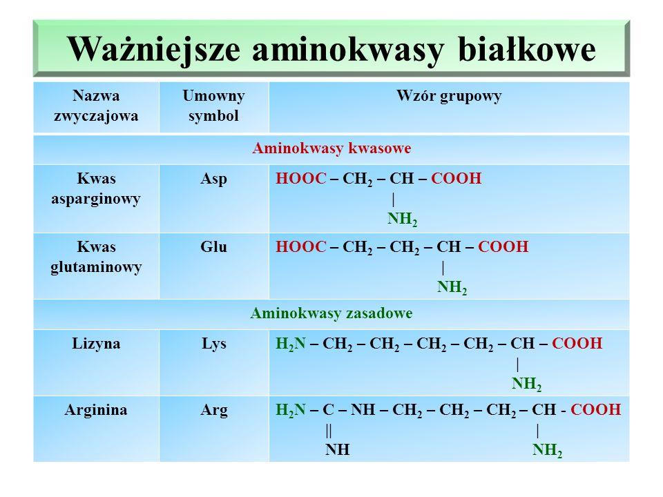 Ważniejsze aminokwasy białkowe Aminokwasy obojętne Nazwa zwyczajowa Umowny symbol Wzór grupowy FenyloalaninaPhe - CH 2 – CH – COOH | NH 2 TyrozynaTyr