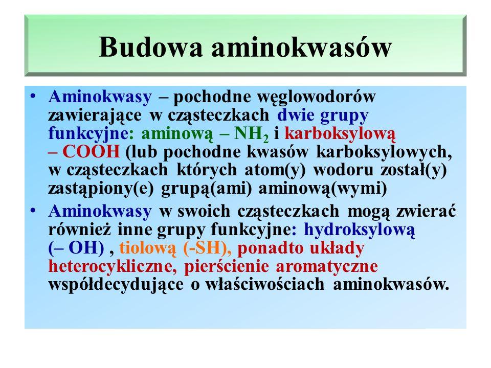 Budowa aminokwasów Aminokwasy – pochodne węglowodorów zawierające w cząsteczkach dwie grupy funkcyjne: aminową – NH 2 i karboksylową – COOH (lub pochodne kwasów karboksylowych, w cząsteczkach których atom(y) wodoru został(y) zastąpiony(e) grupą(ami) aminową(wymi) Aminokwasy w swoich cząsteczkach mogą zwierać również inne grupy funkcyjne: hydroksylową (– OH), tiolową (-SH), ponadto układy heterocykliczne, pierścienie aromatyczne współdecydujące o właściwościach aminokwasów.