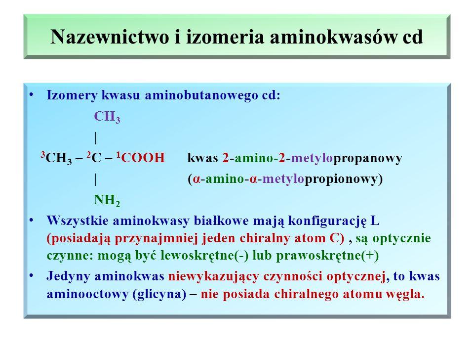 Nazewnictwo i izomeria aminokwasów cd Izomery kwasu aminobutanowego cd: CH 3 | 3 CH 3 – 2 C – 1 COOH kwas 2-amino-2-metylopropanowy | (α-amino-α-metylopropionowy) NH 2 Wszystkie aminokwasy białkowe mają konfigurację L (posiadają przynajmniej jeden chiralny atom C), są optycznie czynne: mogą być lewoskrętne(-) lub prawoskrętne(+) Jedyny aminokwas niewykazujący czynności optycznej, to kwas aminooctowy (glicyna) – nie posiada chiralnego atomu węgla.