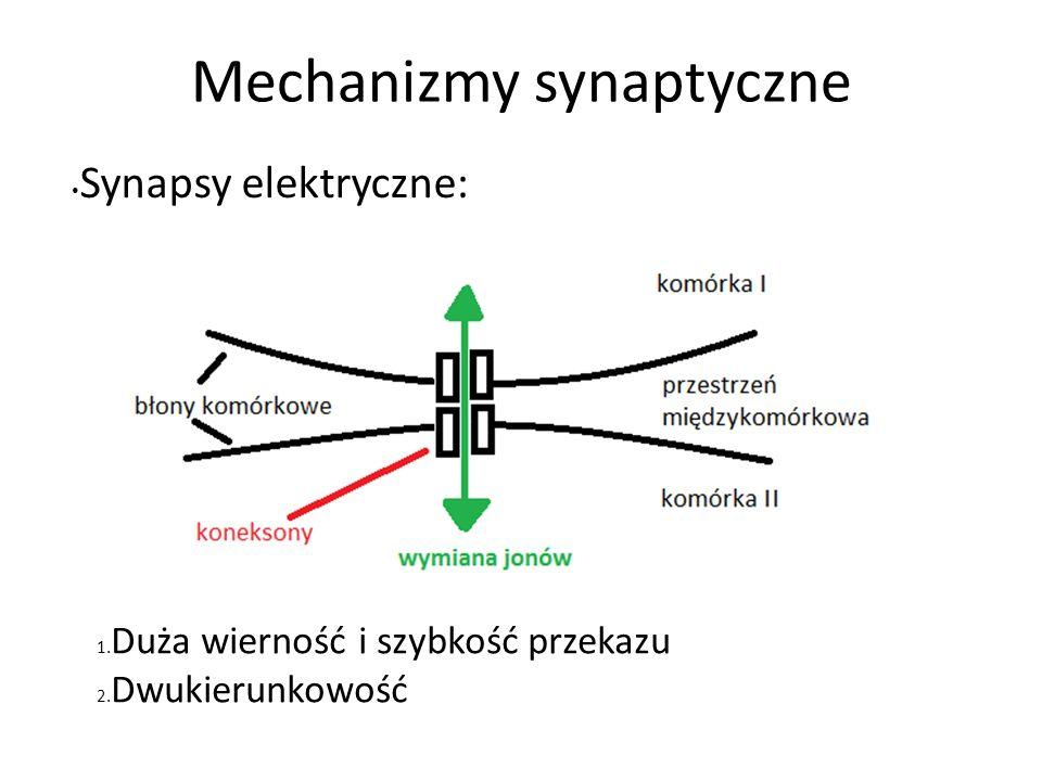 Mechanizmy synaptyczne Synapsy elektryczne: 1. Duża wierność i szybkość przekazu 2. Dwukierunkowość