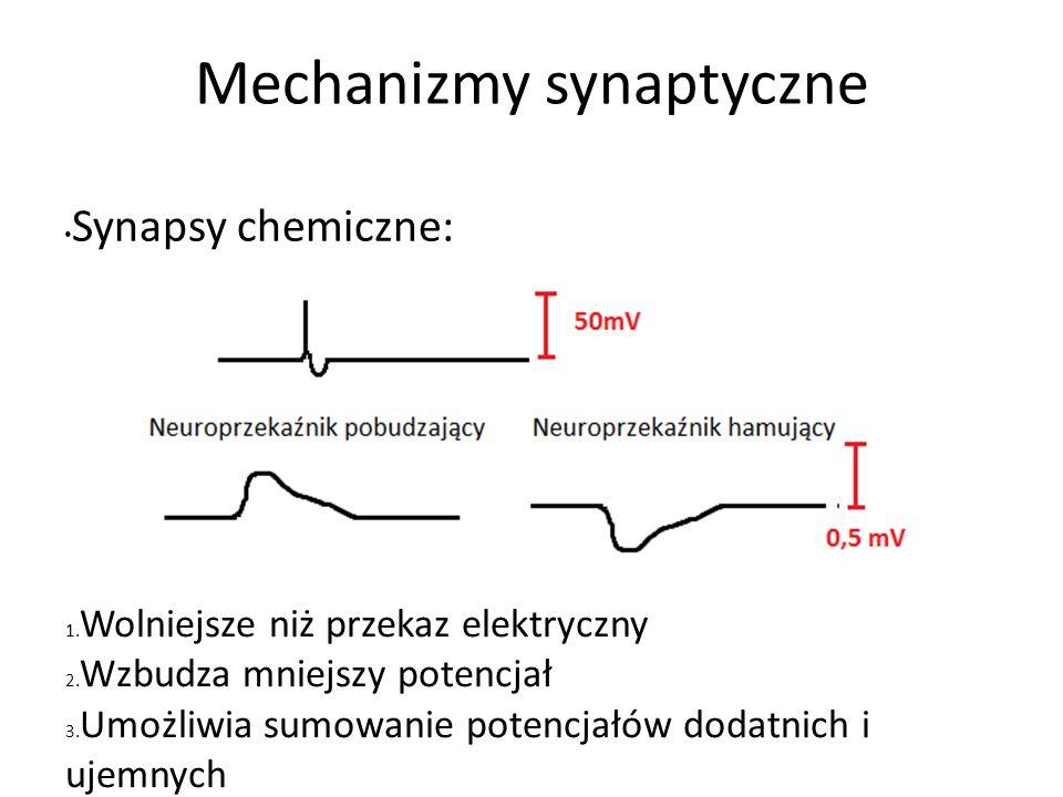 Mechanizmy synaptyczne Synapsy chemiczne: 1. Wolniejsze niż przekaz elektryczny 2.