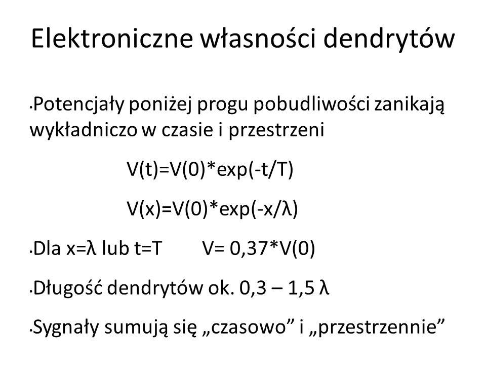 Elektroniczne własności dendrytów Potencjały poniżej progu pobudliwości zanikają wykładniczo w czasie i przestrzeni V(t)=V(0)*exp(-t/T) V(x)=V(0)*exp(-x/λ) Dla x=λ lub t=T V= 0,37*V(0) Długość dendrytów ok.