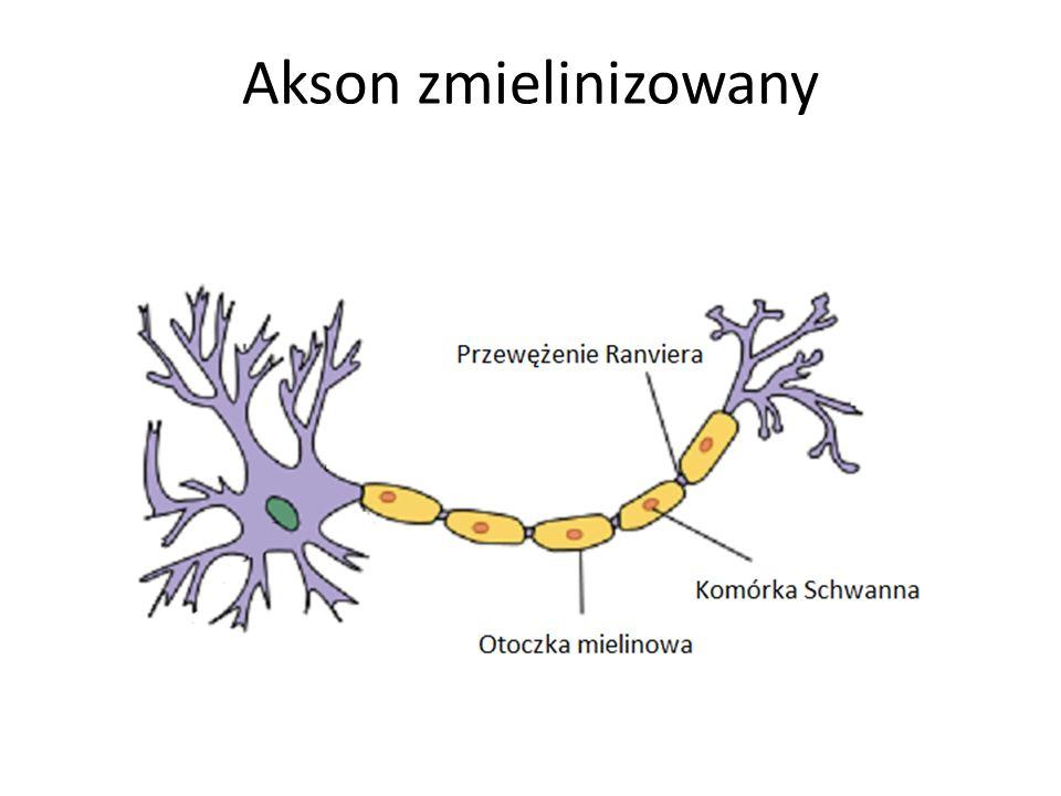 Akson zmielinizowany