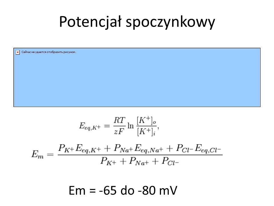 Em = -65 do -80 mV