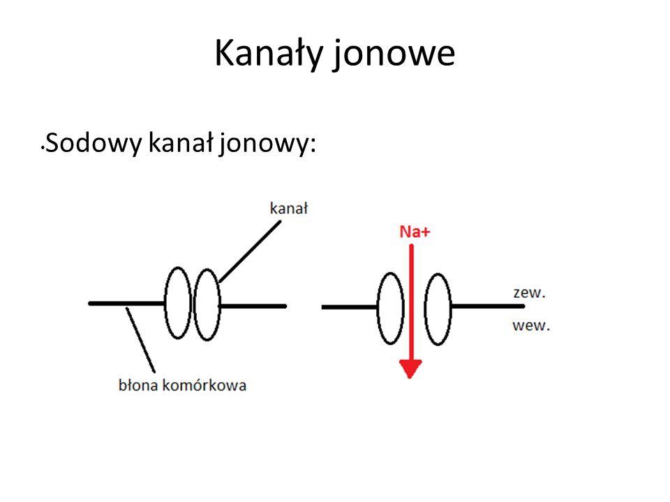 Kanały jonowe Sodowy kanał jonowy: