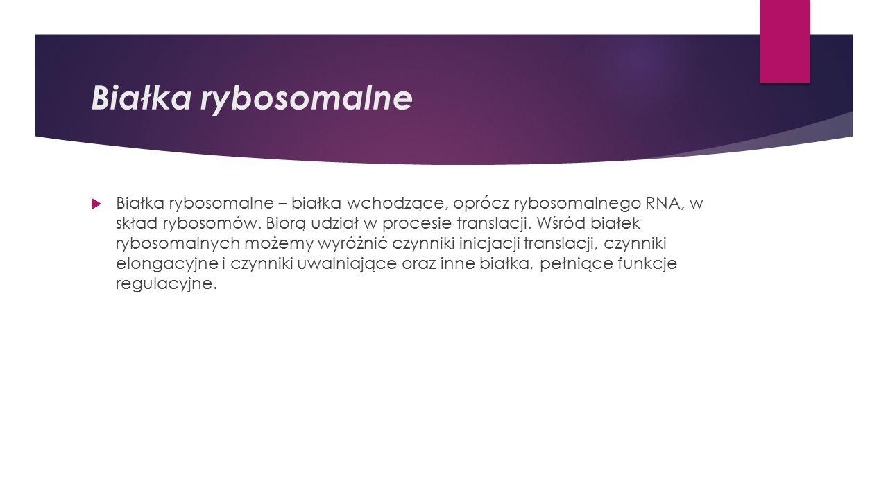 Białka rybosomalne  Białka rybosomalne – białka wchodzące, oprócz rybosomalnego RNA, w skład rybosomów.