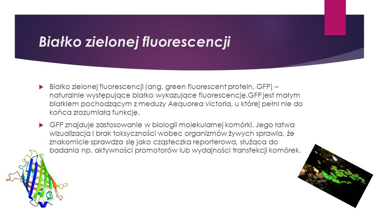 Białko zielonej fluorescencji  Białko zielonej fluorescencji (ang.