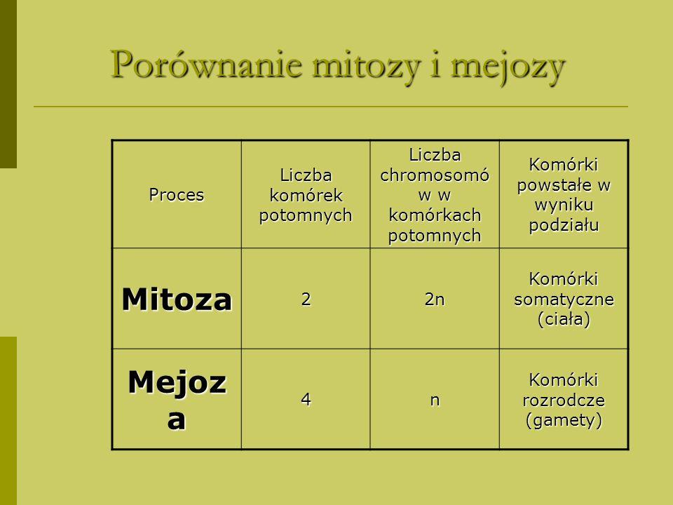 Porównanie mitozy i mejozy Proces Liczba komórek potomnych Liczba chromosomó w w komórkach potomnych Komórki powstałe w wyniku podziału Mitoza22n Komó