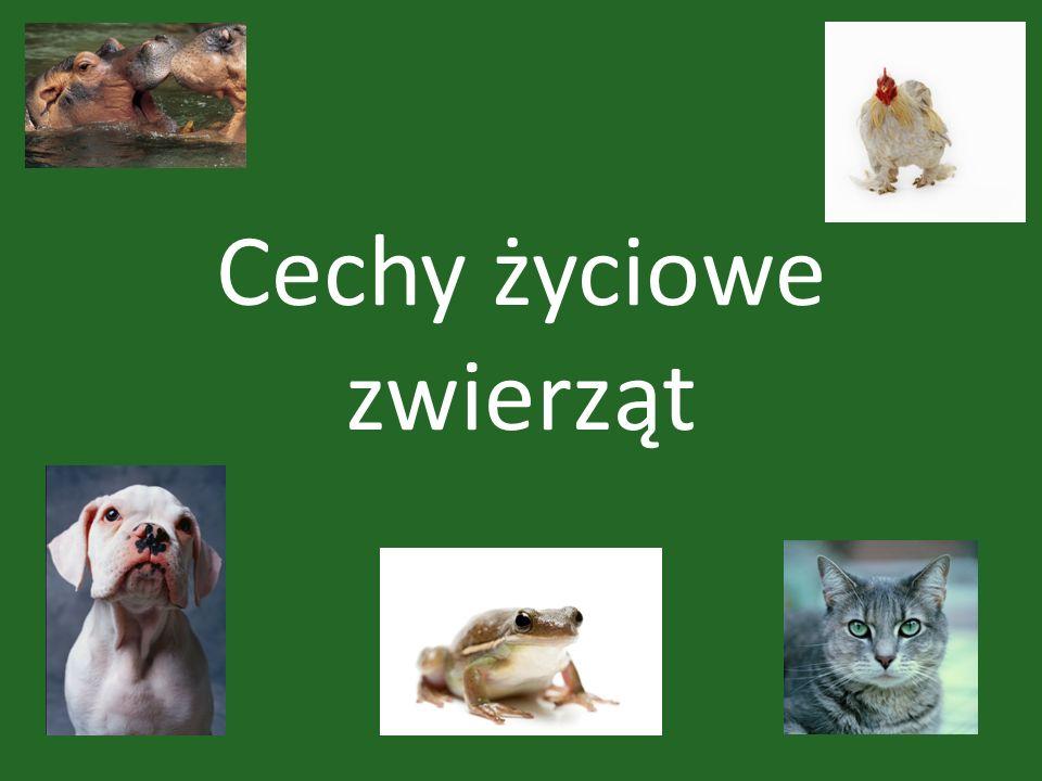 Cechy życiowe zwierząt