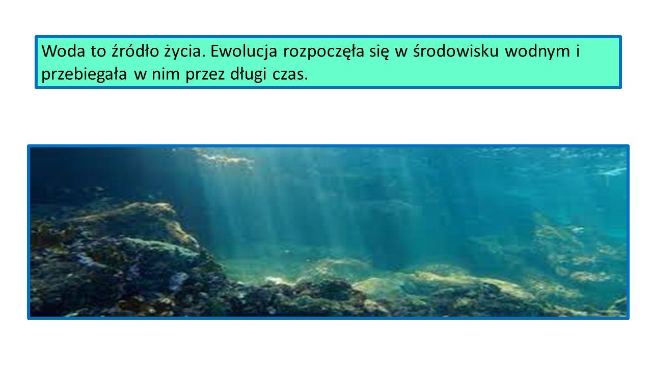 Woda - mieszanina tlenu i wodoru, bezbarwna, bezwonna, niezbędna do życia każdego nawet najmniejszego organizmu.