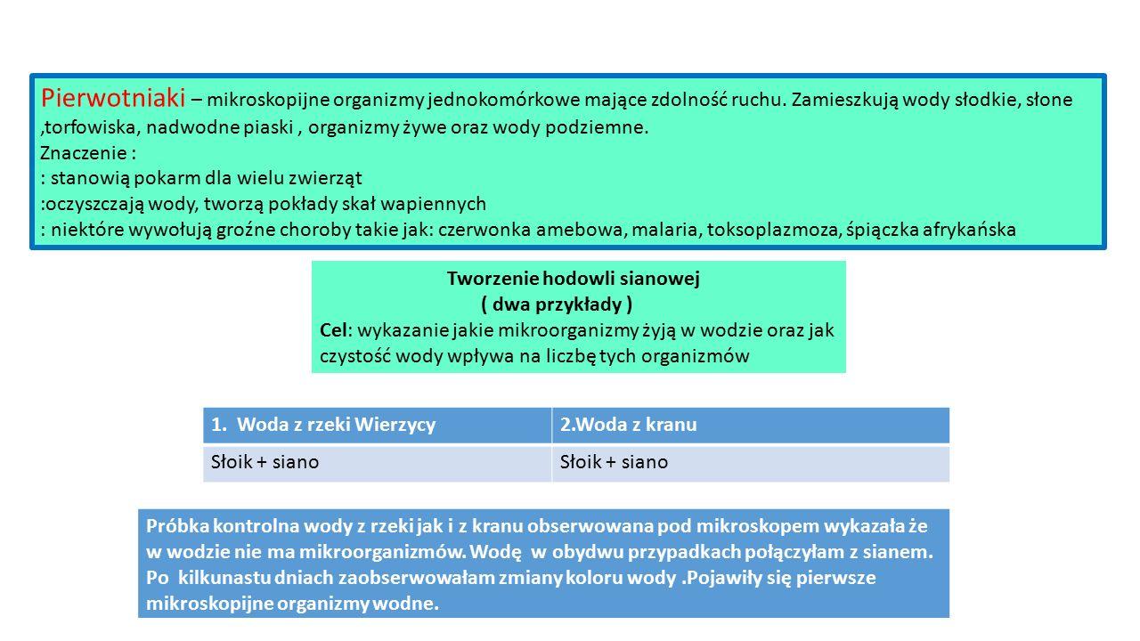 Pierwotniaki – mikroskopijne organizmy jednokomórkowe mające zdolność ruchu.