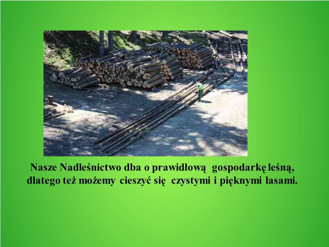 Nasze Nadleśnictwo dba o prawidłową gospodarkę leśną, dlatego też możemy cieszyć się czystymi i pięknymi lasami.