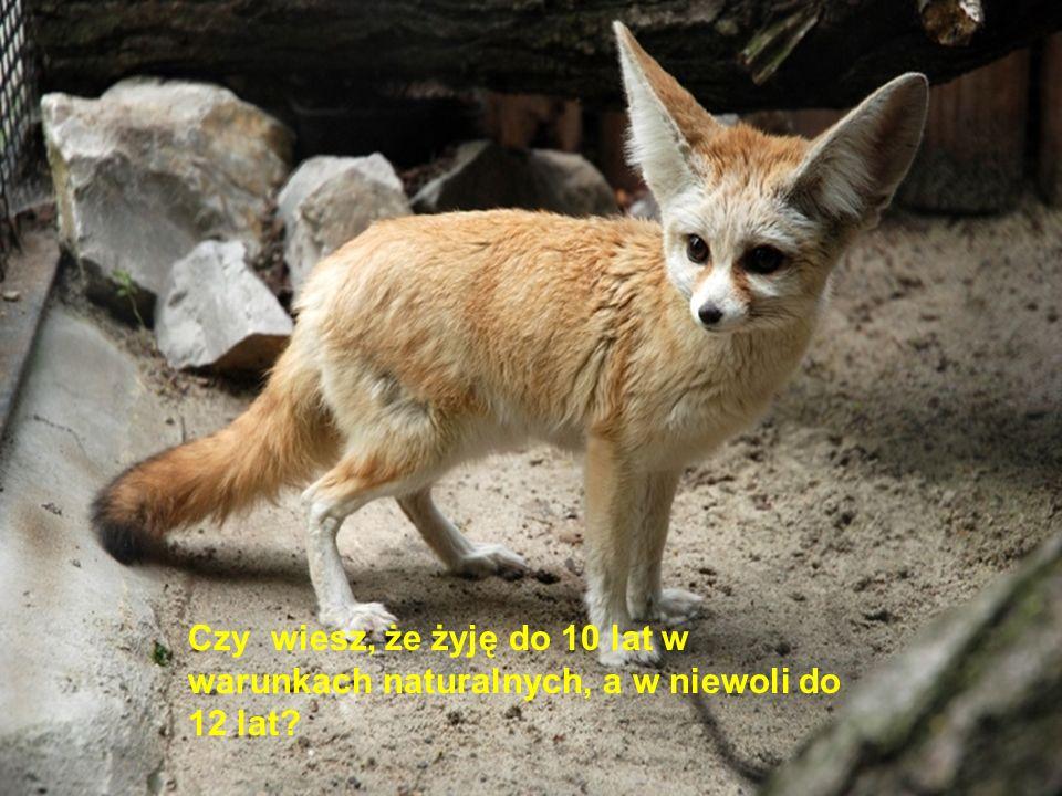Co się lampisz? Śpiącego lisa nie widziałeś?