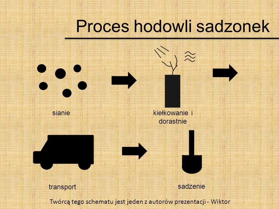 Proces hodowli sadzonek sianiekiełkowanie i dorastnie transport sadzenie Twórcą tego schematu jest jeden z autorów prezentacji - Wiktor