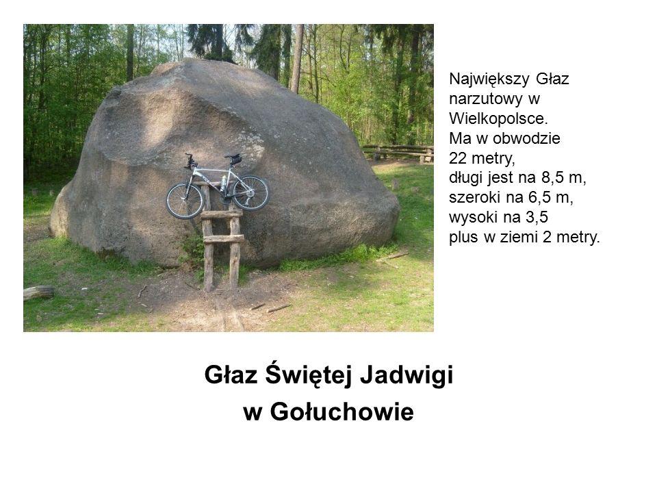 Głaz Świętej Jadwigi w Gołuchowie Głaz Świętej Jadwigi w Gołuchowie Największy Głaz narzutowy w Wielkopolsce. Ma w obwodzie 22 metry, długi jest na 8,