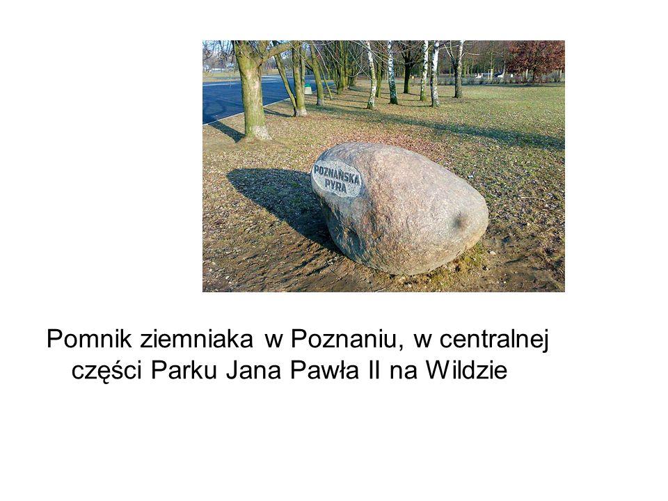 Pomnik ziemniaka w Poznaniu, w centralnej części Parku Jana Pawła II na Wildzie