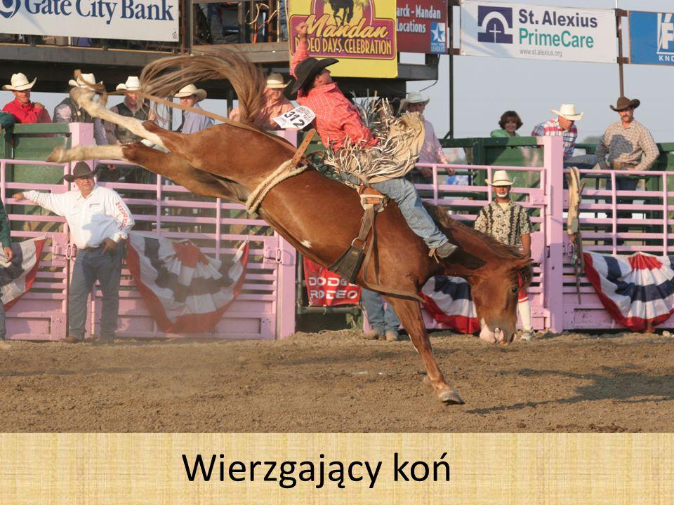 Wierzgający koń