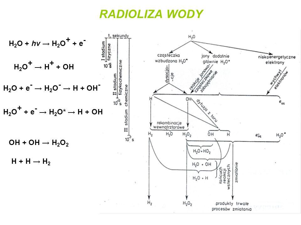 RADIOLIZA WODY H 2 O + hv → H 2 O + + e - H 2 O + → H + + OH H 2 O + e - → H 2 O - → H + OH - H 2 O + + e - → H 2 O* → H + OH OH + OH → H 2 O 2 H + H