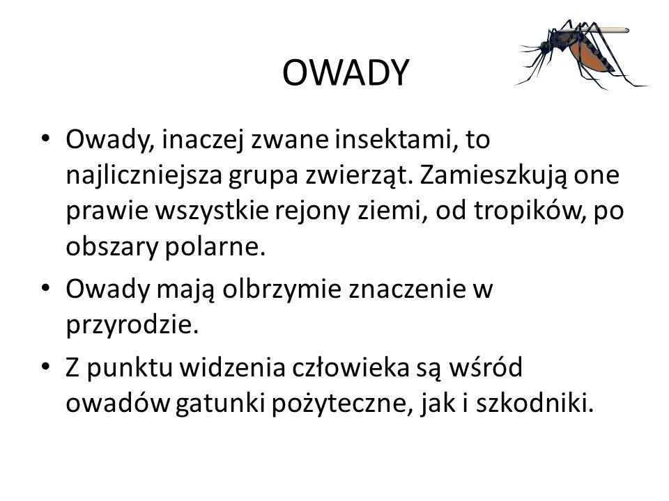 OWADY Owady, inaczej zwane insektami, to najliczniejsza grupa zwierząt. Zamieszkują one prawie wszystkie rejony ziemi, od tropików, po obszary polarne