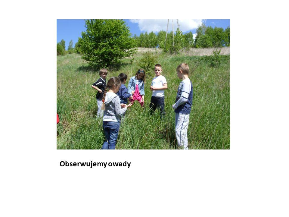 Obserwujemy owady