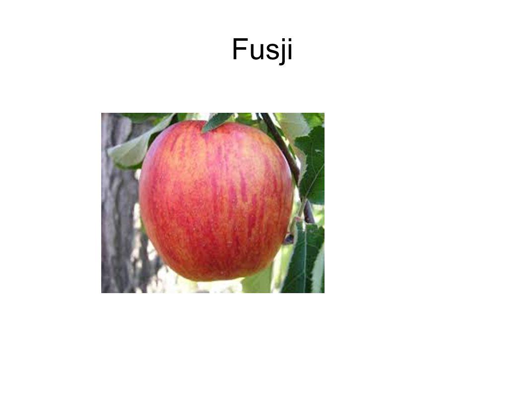 Fusji
