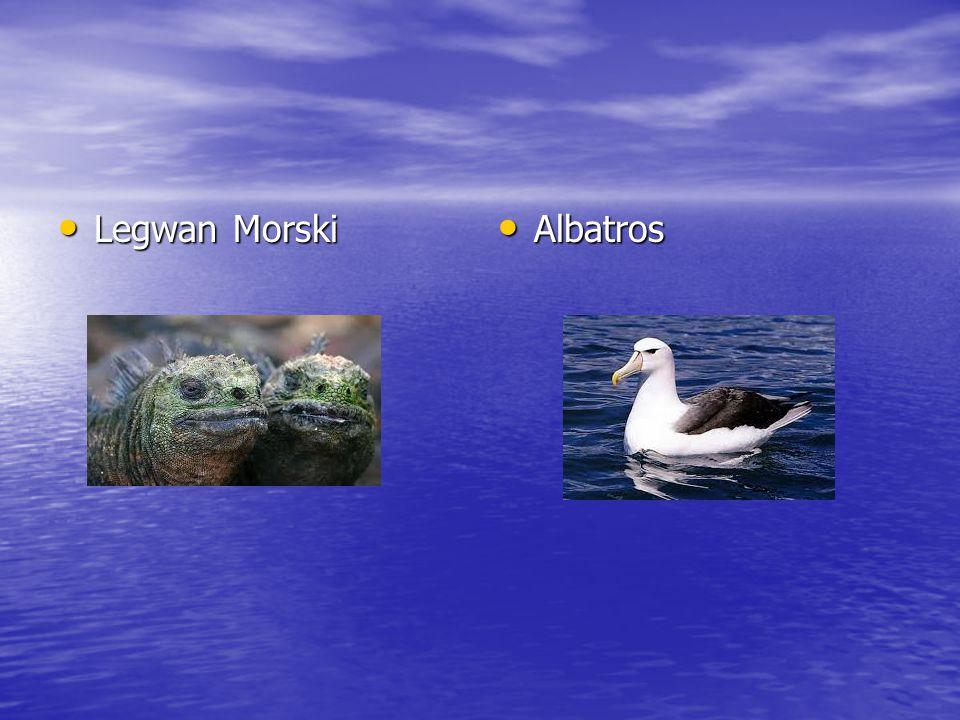 Legwan Morski Legwan Morski Albatros Albatros