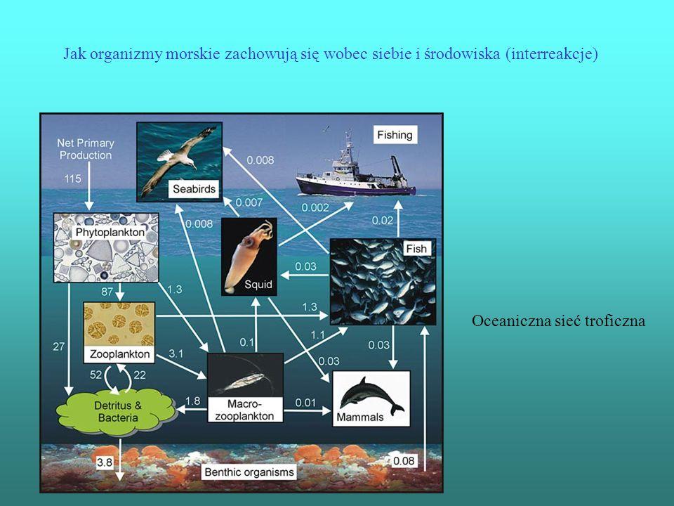 Jak organizmy morskie zachowują się wobec siebie i środowiska (interreakcje) Oceaniczna sieć troficzna