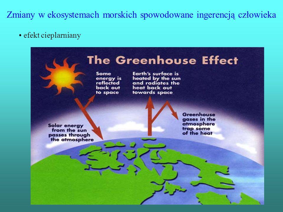 Zmiany w ekosystemach morskich spowodowane ingerencją człowieka efekt cieplarniany