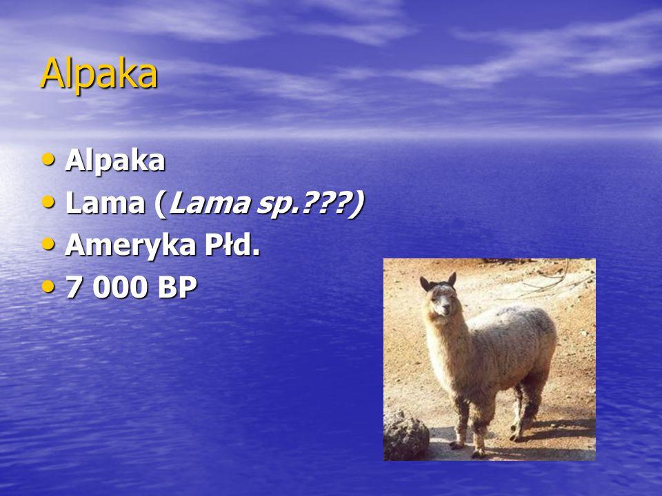 Alpaka Alpaka Alpaka Lama (Lama sp.???) Lama (Lama sp.???) Ameryka Płd. Ameryka Płd. 7 000 BP 7 000 BP