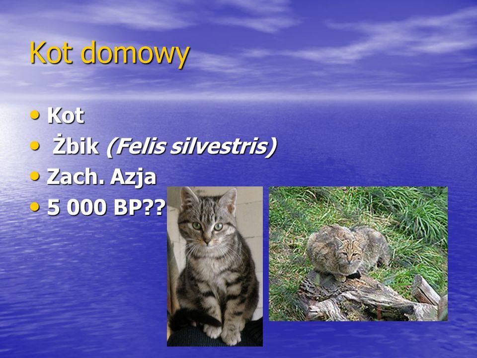 Kot domowy Kot Kot Żbik (Felis silvestris) Żbik (Felis silvestris) Zach. Azja Zach. Azja 5 000 BP?? 5 000 BP??