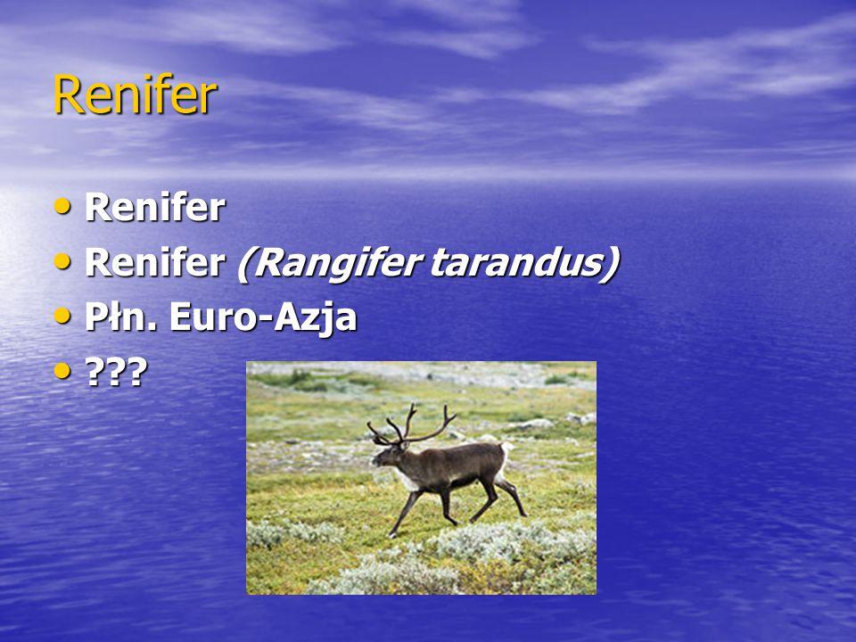 Renifer Renifer Renifer Renifer (Rangifer tarandus) Renifer (Rangifer tarandus) Płn. Euro-Azja Płn. Euro-Azja ??? ???