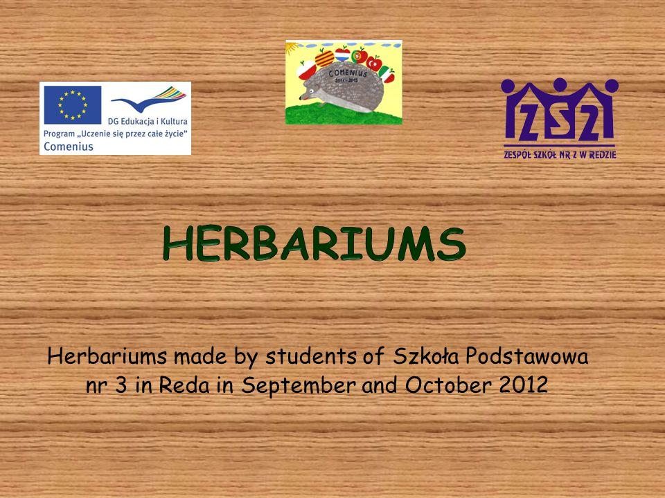 Herbarium (zielnik) made by Jakub Majcherek (class 4b)