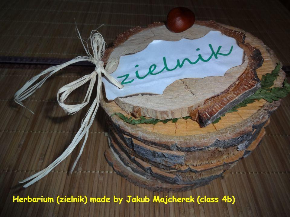 Herbariums made under the supervision of Estera Miotk, the biology teacher. Reda, 2012
