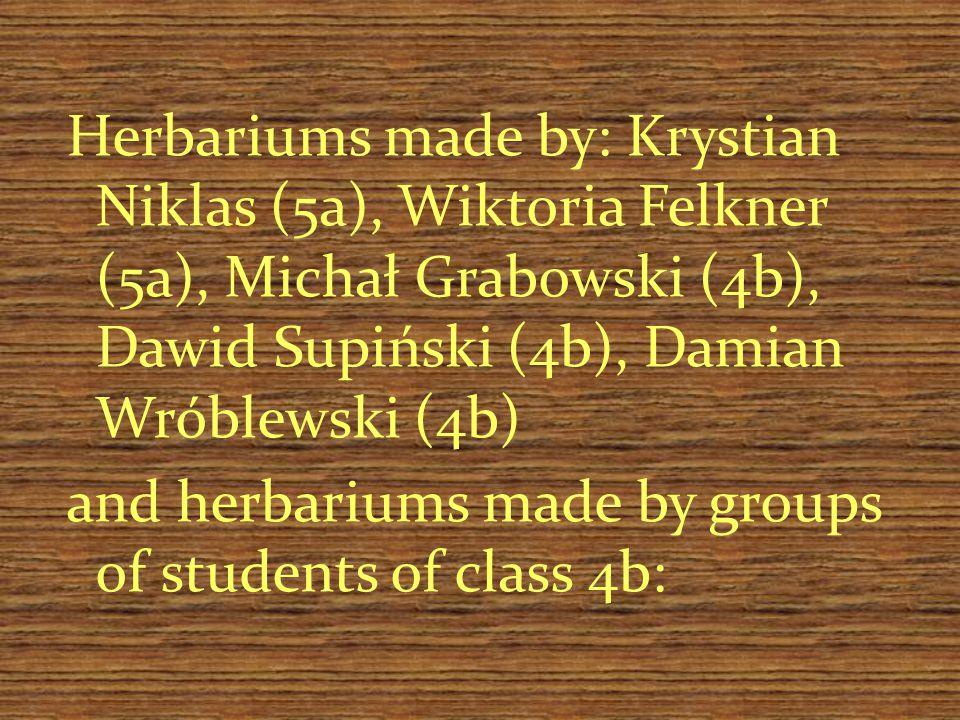 Herbariums made by: Krystian Niklas (5a), Wiktoria Felkner (5a), Michał Grabowski (4b), Dawid Supiński (4b), Damian Wróblewski (4b) and herbariums made by groups of students of class 4b: