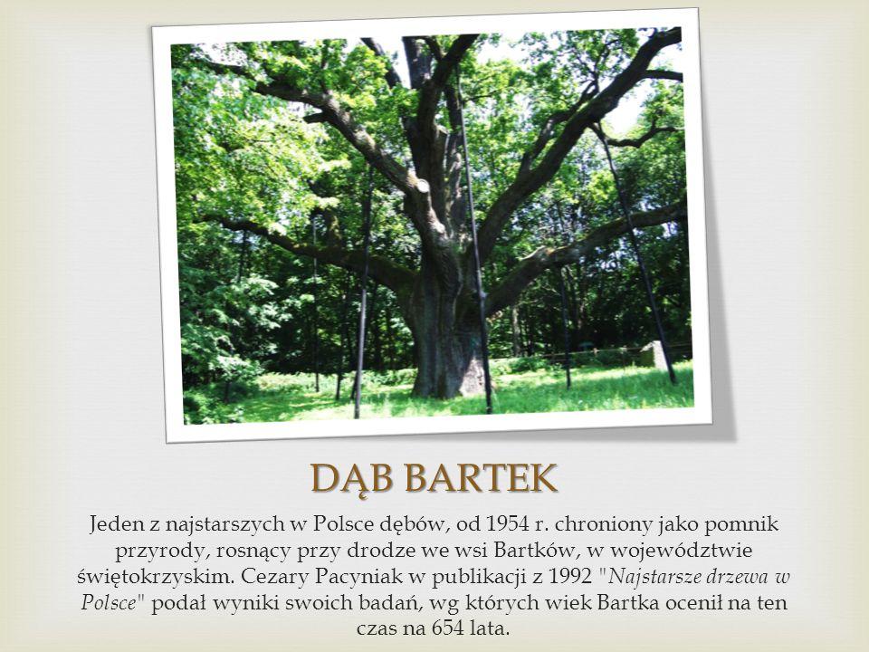 CIS HENRYKOWSKI Jest najstarszym drzewem w Polsce. Rośnie oparty o będący w bezpośrednim sąsiedztwie dom nr 293 we wsi Henryków Lubański, niedaleko Lu