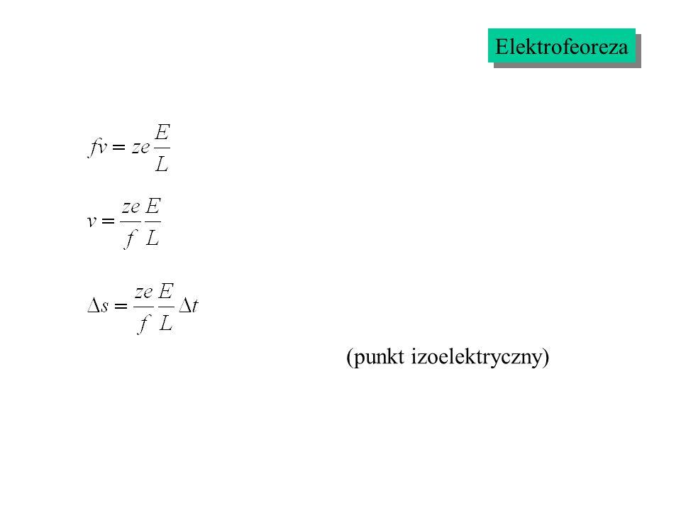 Elektrofeoreza (punkt izoelektryczny)