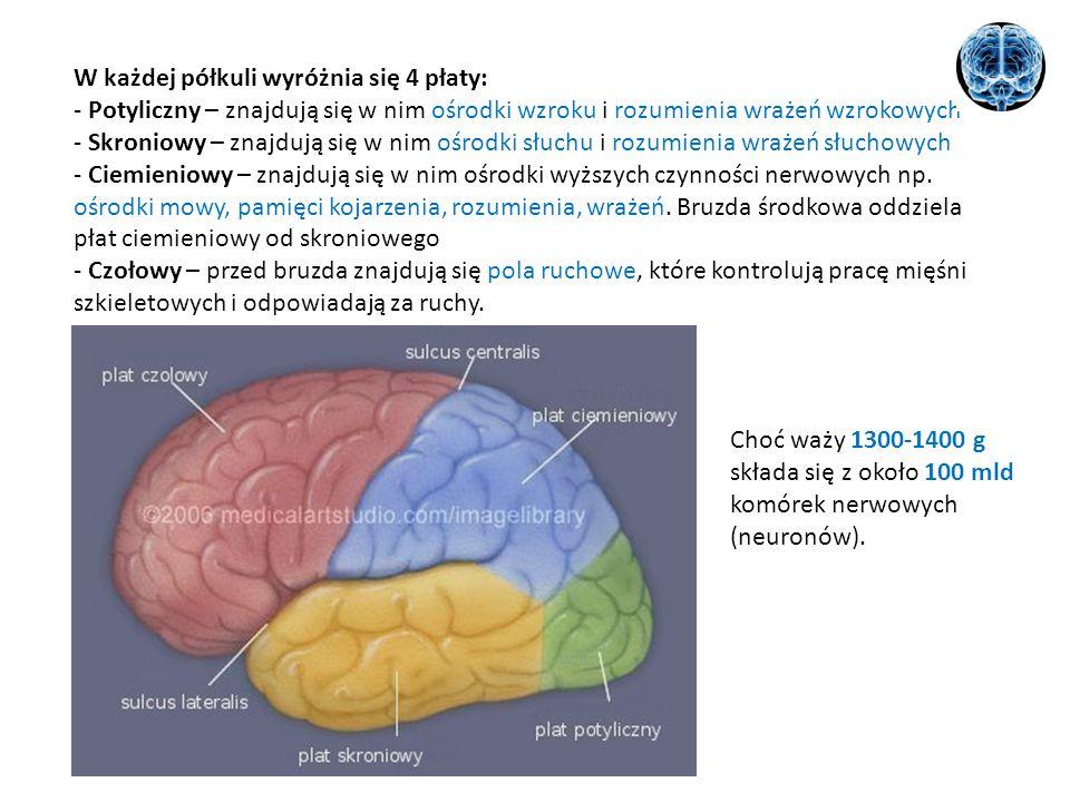 W każdej półkuli wyróżnia się 4 płaty: - Potyliczny – znajdują się w nim ośrodki wzroku i rozumienia wrażeń wzrokowych - Skroniowy – znajdują się w ni