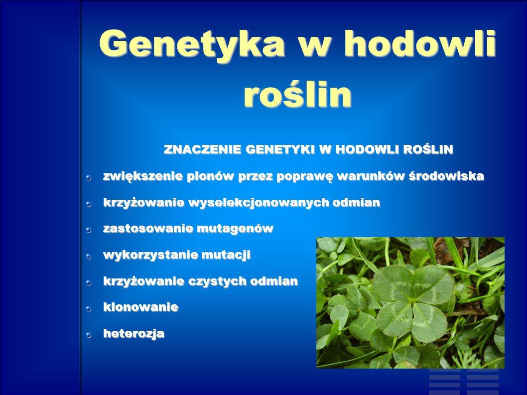 Genetyka w hodowli roślin Zadaniem hodowli roślin jest ulepszanie roślin uprawnych i tworzenie nowych odmian, podobnie jak w hodowli zwierząt wykorzystano wiele nauk a przede wszystkim genetykę.