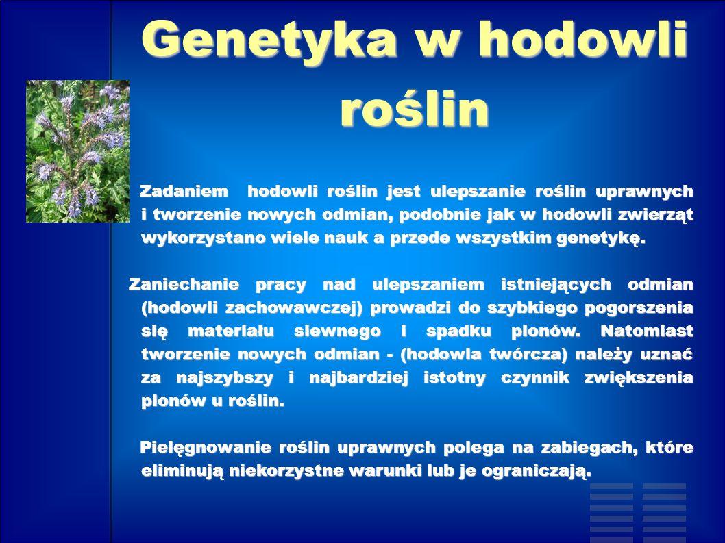 Genetyka w hodowli roślin Zadaniem hodowli roślin jest ulepszanie roślin uprawnych i tworzenie nowych odmian, podobnie jak w hodowli zwierząt wykorzys