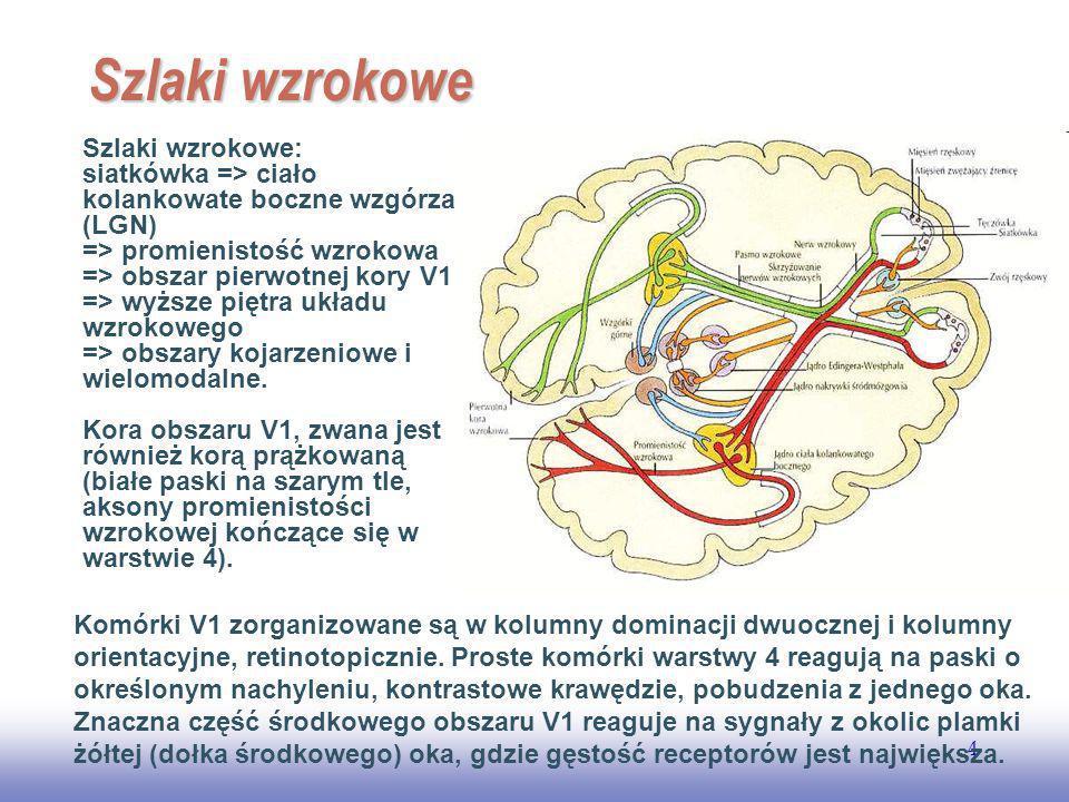 EE141 4 Szlaki wzrokowe Szlaki wzrokowe: siatkówka => ciało kolankowate boczne wzgórza (LGN) => promienistość wzrokowa => obszar pierwotnej kory V1 => wyższe piętra układu wzrokowego => obszary kojarzeniowe i wielomodalne.
