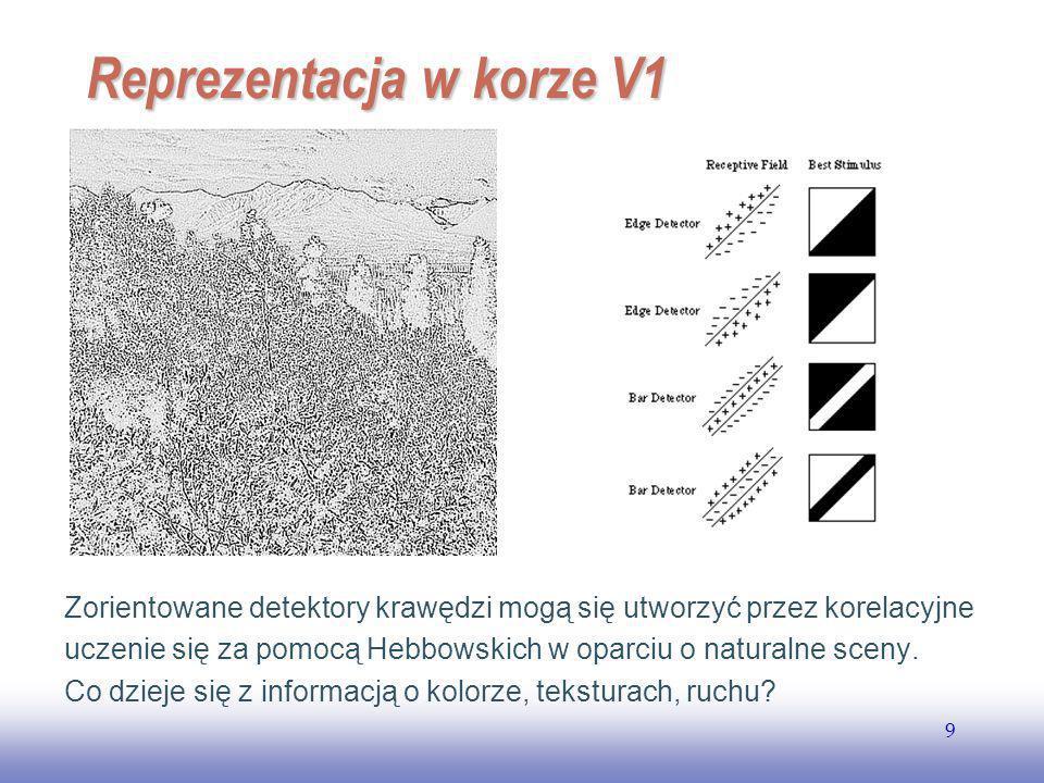 EE141 9 Reprezentacja w korze V1 Zorientowane detektory krawędzi mogą się utworzyć przez korelacyjne uczenie się za pomocą Hebbowskich w oparciu o naturalne sceny.