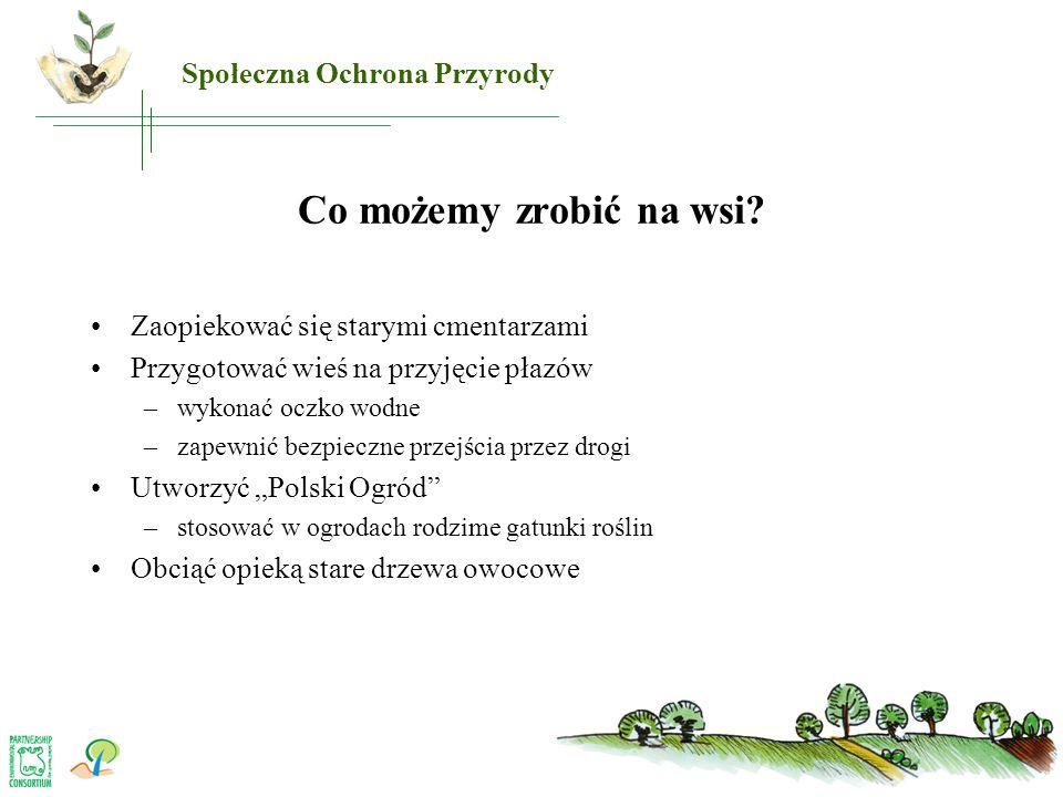 Co możemy zrobić na wsi? •Zaopiekować się starymi cmentarzami •Przygotować wieś na przyjęcie płazów –wykonać oczko wodne –zapewnić bezpieczne przejści