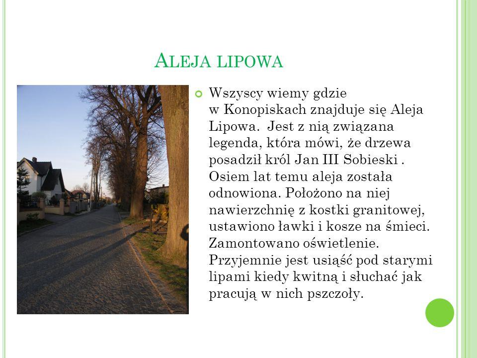 A LEJA LIPOWA Wszyscy wiemy gdzie w Konopiskach znajduje się Aleja Lipowa. Jest z nią związana legenda, która mówi, że drzewa posadził król Jan III So