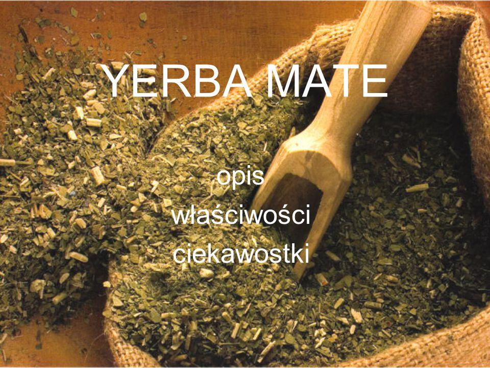 YERBA MATE opis właściwości ciekawostki