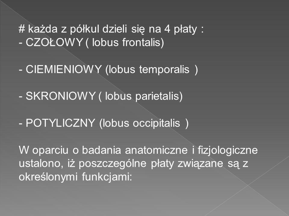 # każda z półkul dzieli się na 4 płaty : - CZOŁOWY ( lobus frontalis) - CIEMIENIOWY (lobus temporalis ) - SKRONIOWY ( lobus parietalis) - POTYLICZNY (
