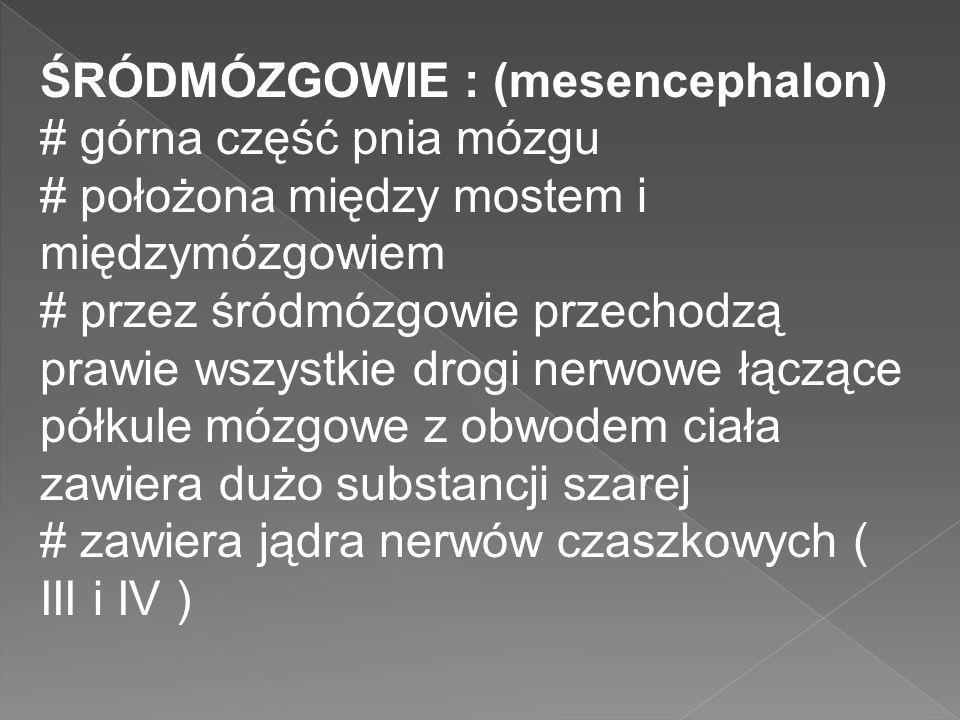 ŚRÓDMÓZGOWIE : (mesencephalon) # górna część pnia mózgu # położona między mostem i międzymózgowiem # przez śródmózgowie przechodzą prawie wszystkie dr